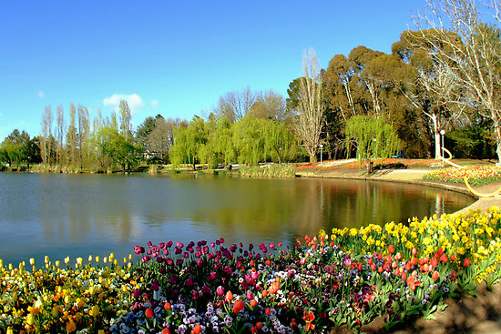 Floriade at Commonwealth Park by Penelope Thomas