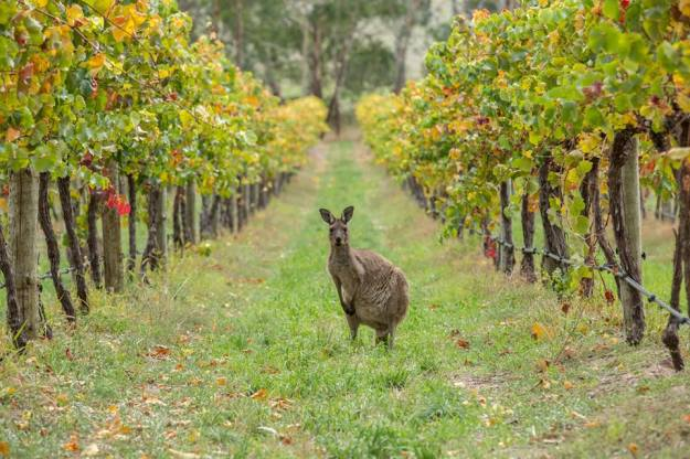Australian wines photo by Greg Snell