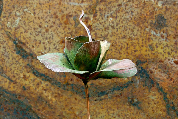 Annie Storey rose