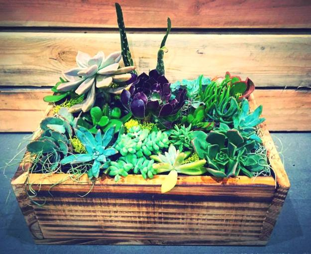 Box gardens by Melissa-Rose
