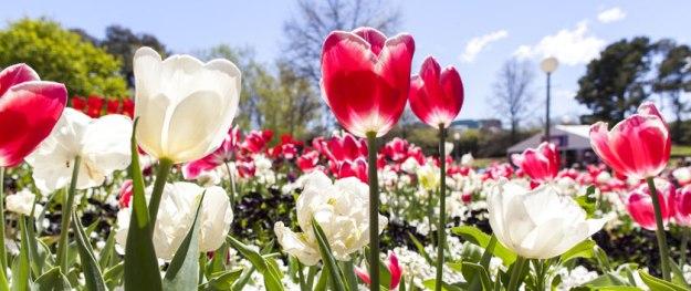 floriade-flower-banner