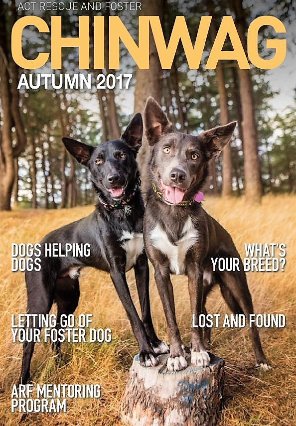 Autumn ChinWag cover image