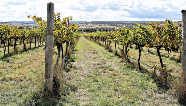 canberra vineyard