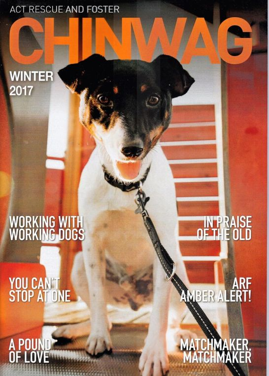 Scout winter 2017